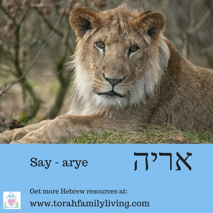 lion - arye Learn more Hebrew words with our Psalm 119 copywork book.