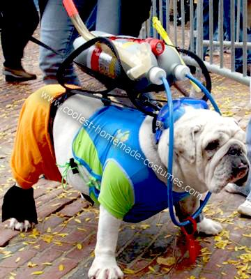 Homemade Scuba Bulldog Costume: I rescued Max, an English Bulldog, from the NSPCA in Springfield, MA in April of 2008. At the time he had ringworm, was underweight and had been abandoned