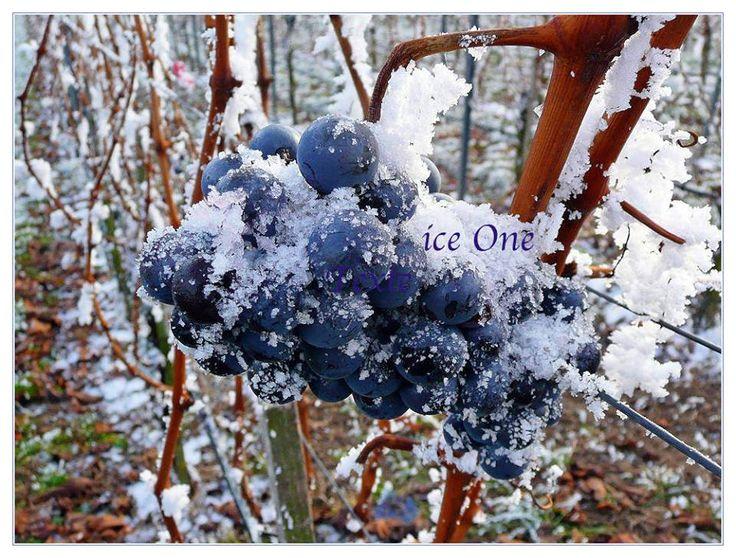 vino del ghiaccio Casa Ronsil Chiomonte