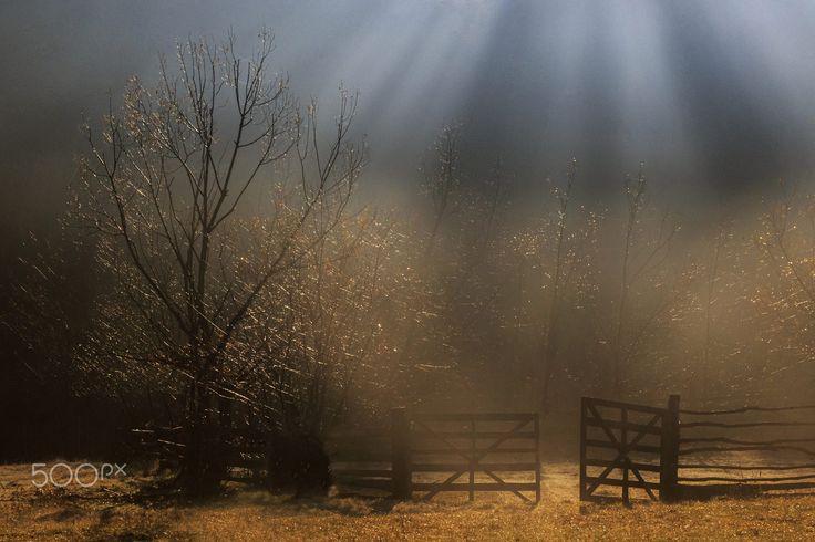 Magic morning by Sveduneac Dorin Lucian on 500px