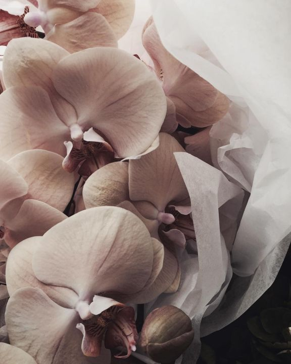 The LANE List: Sydney Wedding Florists / My Violet