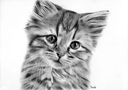 Kociak rysunek ołówek