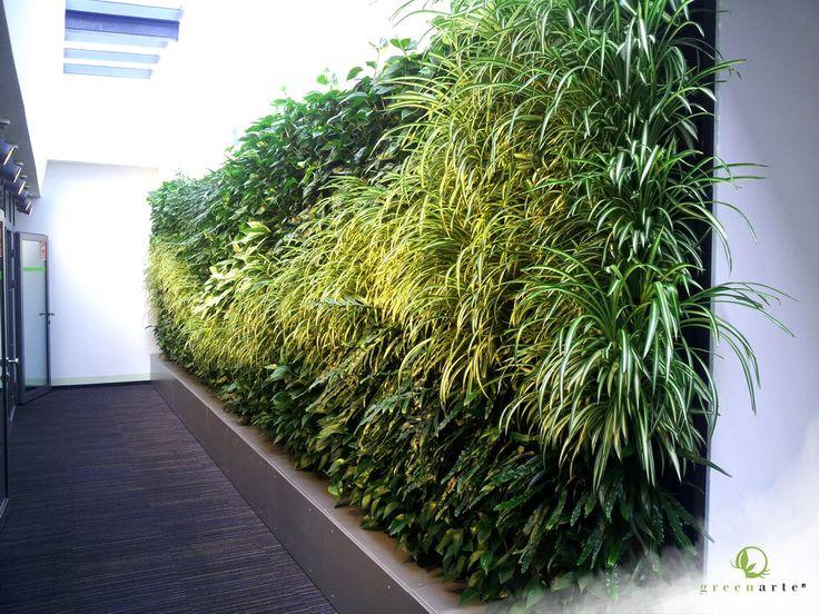 Modułowe zielone ściany w Katowickim biurze - sierpień 2014