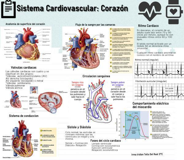 "Infografia No.5 SISTEMA CARDIOVASCULAR: CORAZÓN - IRMA IRIDIAN TELLO DEL REAL 3° ""C"""