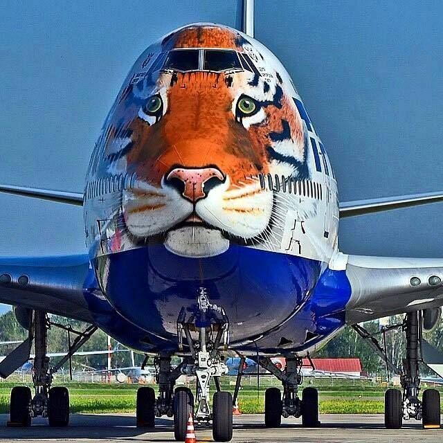 This is a Russian commercial liner painted to call attention to the plight of the AMUR tigers and leopards- please support their pages and programs. 2016 WILL BE THE YEAR OF THE CAT- LARGE AND SMALL- AND ALL THE OTHER BELEAGUERED ANIMALS ON THIS PLANET come join us-https://www.facebook.com/photo.php?fbid=10207075056293801&set=a.2