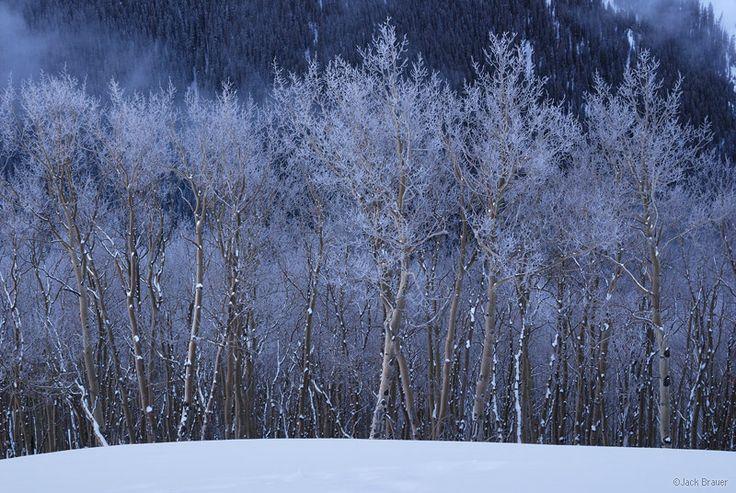 Uncompahgre Wilderness, Colorado | frosty aspens, Uncompahgre Wilderness, Colorado, photo