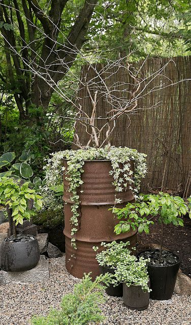 Oilbarrel for gardening. Growing or watercontainer.
