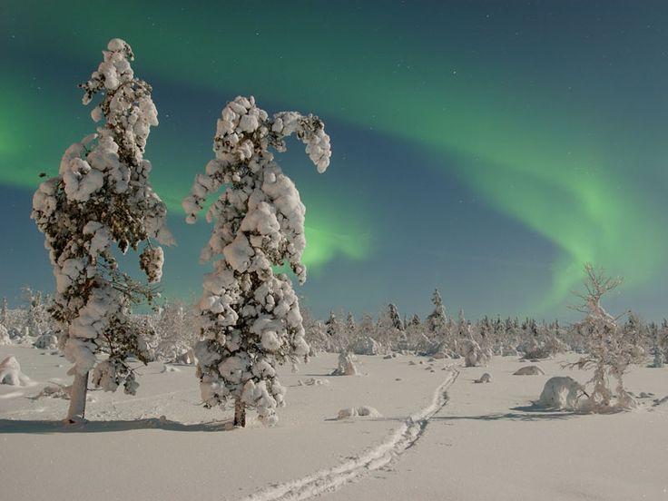 Talvinen pohjoinen luonto