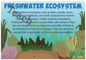 Freshwater Ecosystems Poster