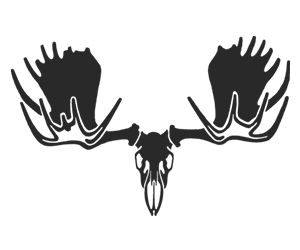 Moose skull drawing - photo#10