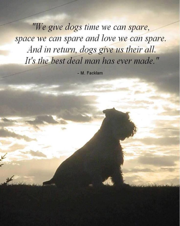 We give dogs time we can spare, space we can share...