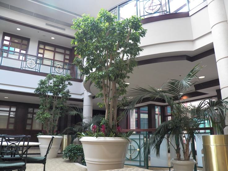 Interior Potted Trees U0026 Palms