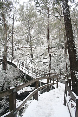 An occasional Winter wonderland, Mt Kaputar National Park - NSW
