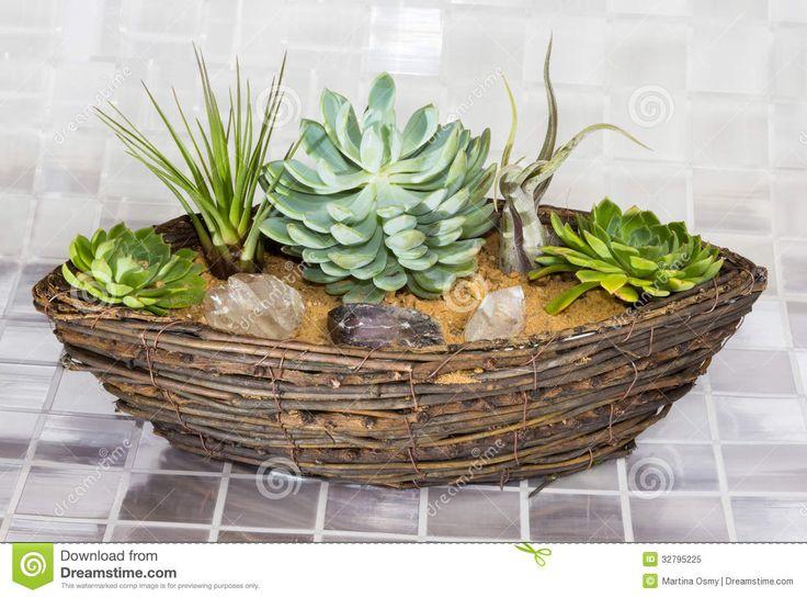 Assorted succulents,  tillandsia arrangement - in Basket