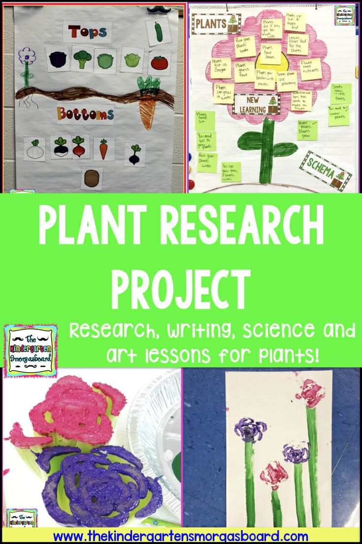 Plants Research Project Research Projects Kindergarten Projects Kindergarten Smorgasboard [ 1102 x 735 Pixel ]