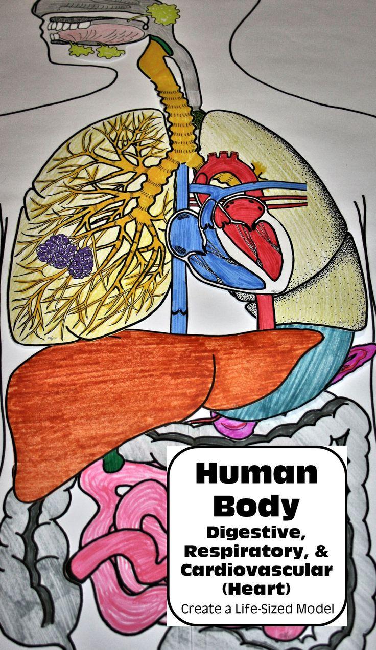 The human demography and life lab