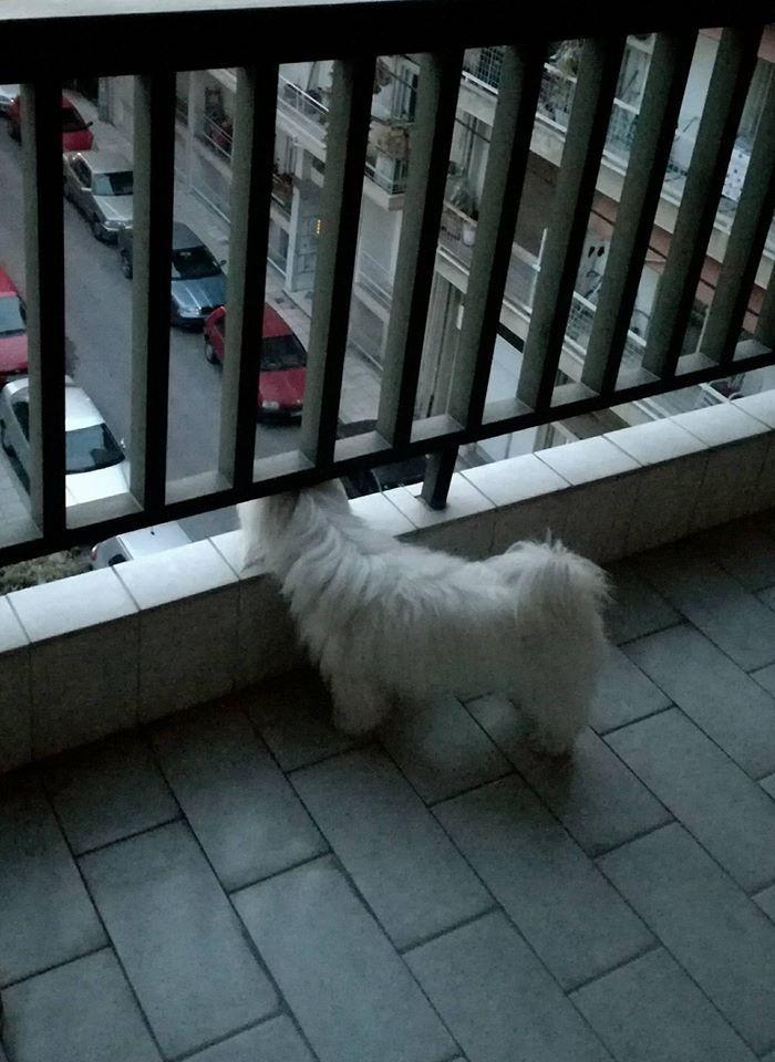 guarding the neighborhood