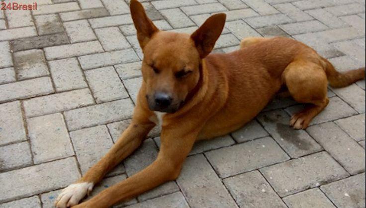 Cachorro cego de um olho procura adotante em SP