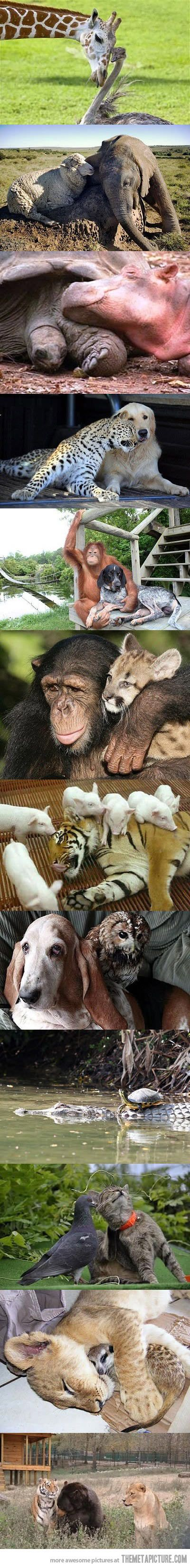 Unlikely Friendships.... Animals - I LOVE, LOVE, LOVE this!
