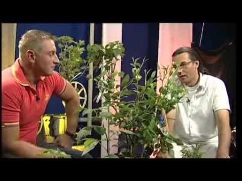 Bogyós gyümölcsök - kertészeti tanácsok