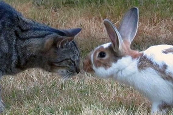 Tabby Cat With Brown And White Bunny Cat And Bunny Friends Rabbit Bedding Pet Rabbit Rabbit