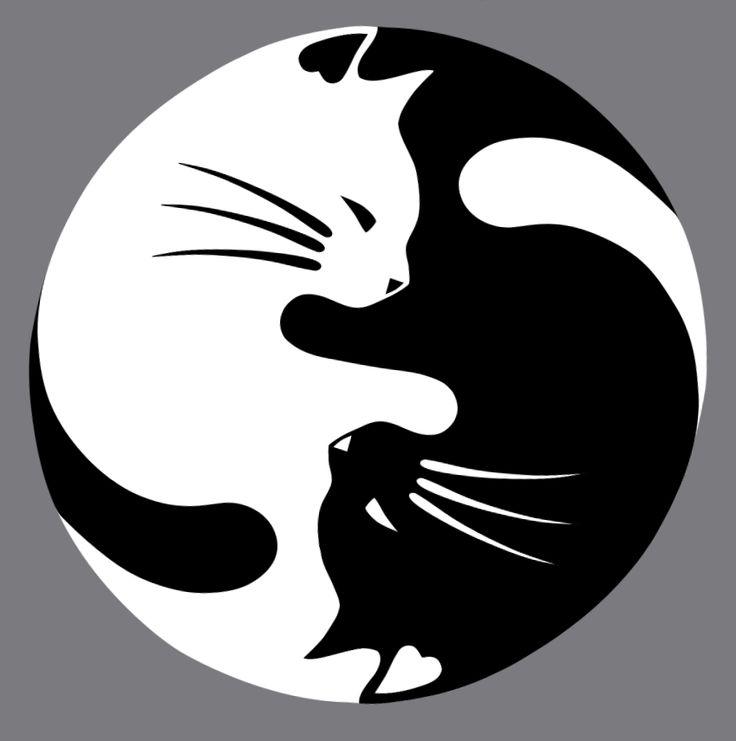 yin yang cat - Buscar con Google                                                                                                                                                                                 Más