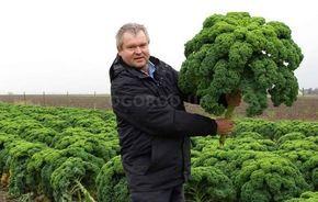 Об этой капусте знают немногие – ее семена нечасто встречаются в продаже. И это обидно, ведь кале – один из самых удивительных овощей. Во-первых, она невероятная красавица – на Западе ее часто высажи…