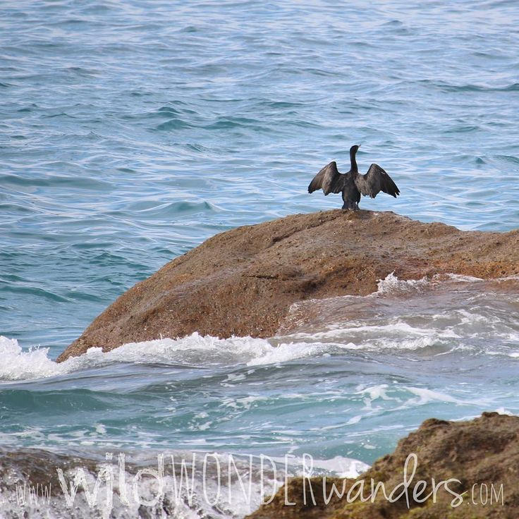 Just a #cormorant drying off its wings in #puertovallarta