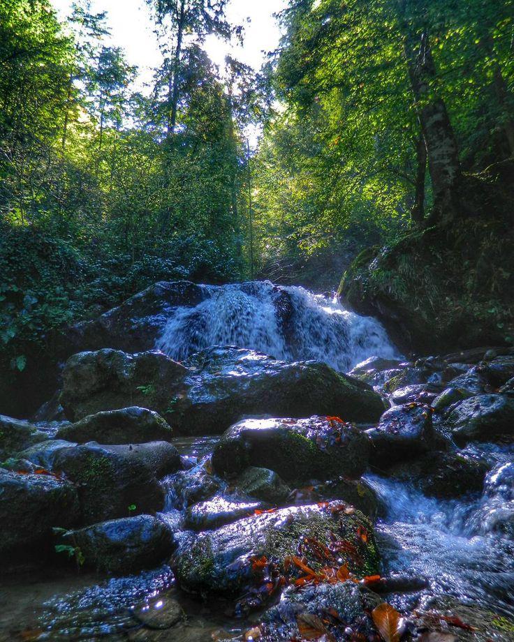 """51 Beğenme, 4 Yorum - Instagram'da Ü z e y i r  K a y a (@turkcuzeyir): """"#goodmorning #natural #natgeo #riverside #tree #naturelovers #trekking"""""""