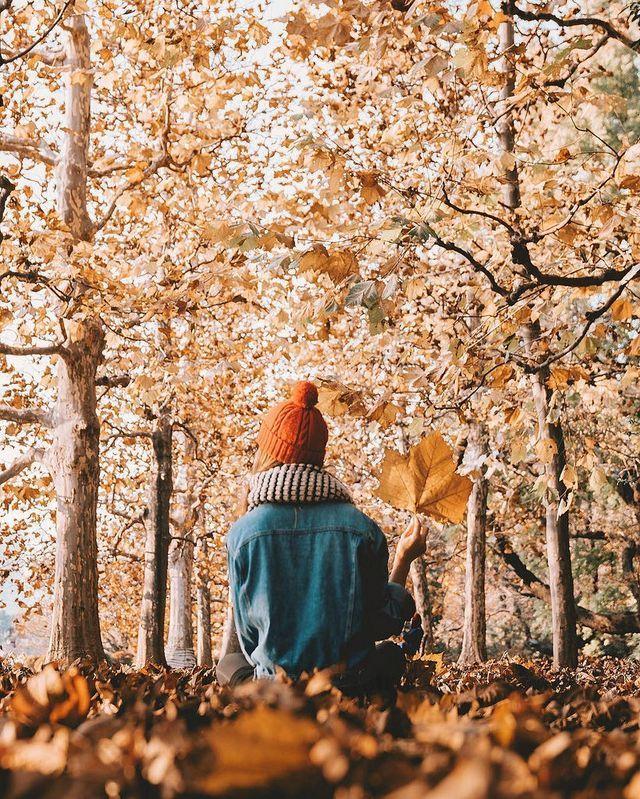 Herbstliches Moodboard (Wäscheständer)