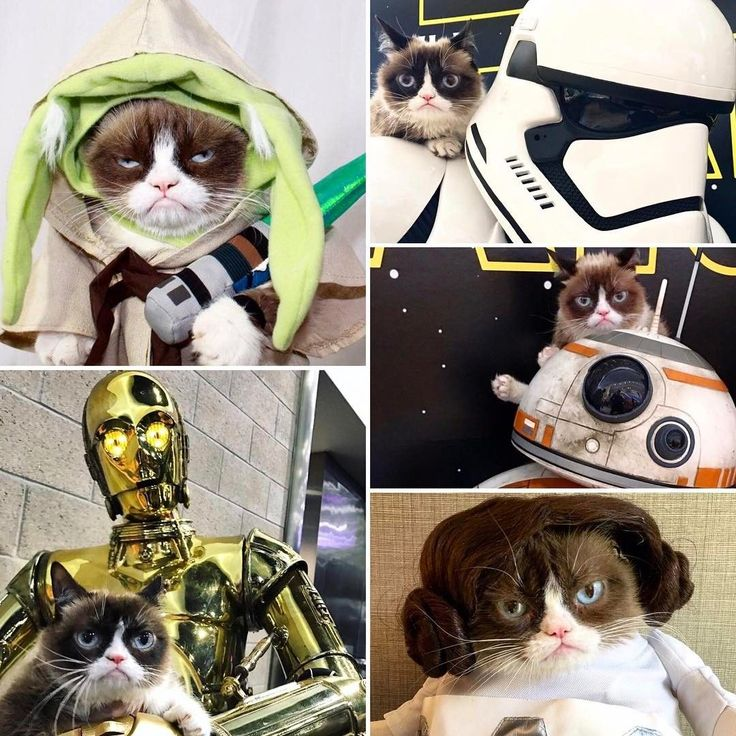 May The 4th Be With You Cat: Best 25+ Grumpy Kitty Ideas On Pinterest