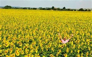 Nicholas Watt with his sunflowers