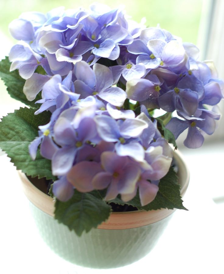 blue mini hydrangea in pastel green wooden bowl. made to last