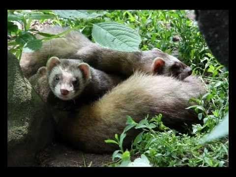 3 A mező növény  és állatvilága   Emlősök - YouTube