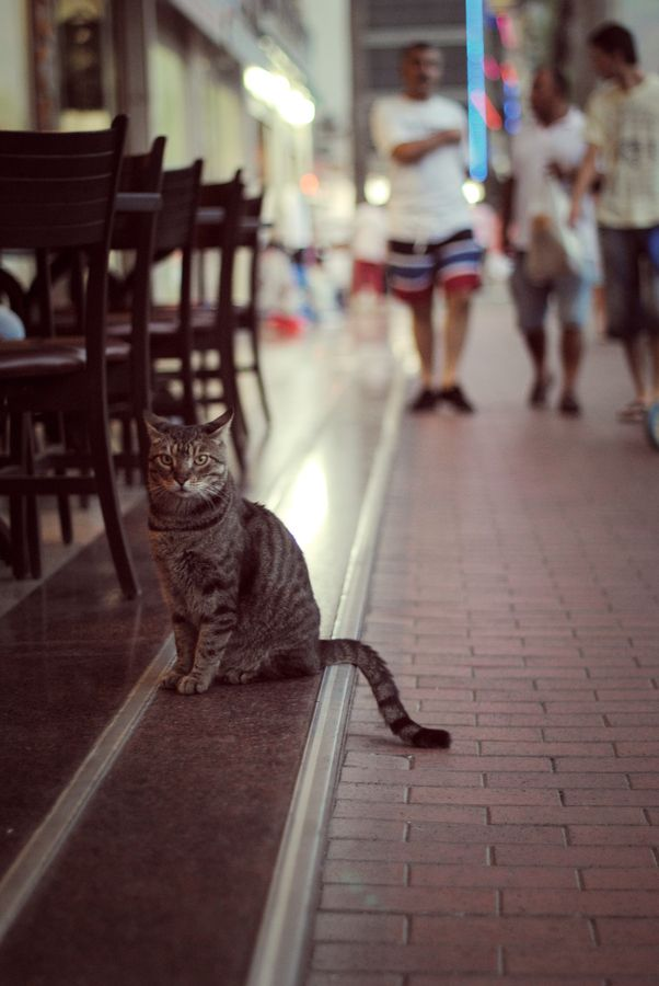 cat visiting a cafe
