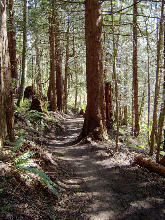 Stimpson Nature Reserve, Bellingham, WA