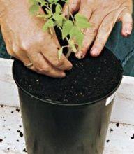 Des astuces de jardinage pour faire pousser une datte