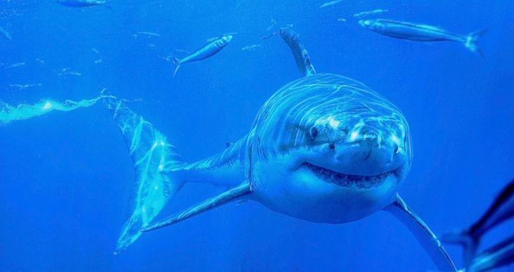Hai-Attacke in Australien