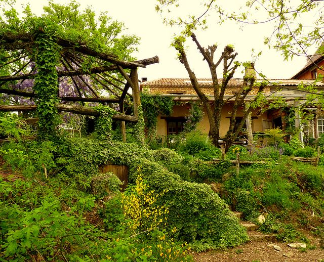 Underground root store covered in Ivy and Wisteria | Flickr - Photo Sharing!