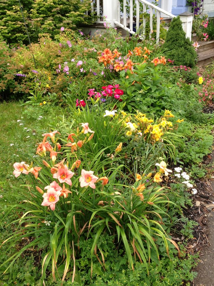 32 Best Daylilies Images On Pinterest