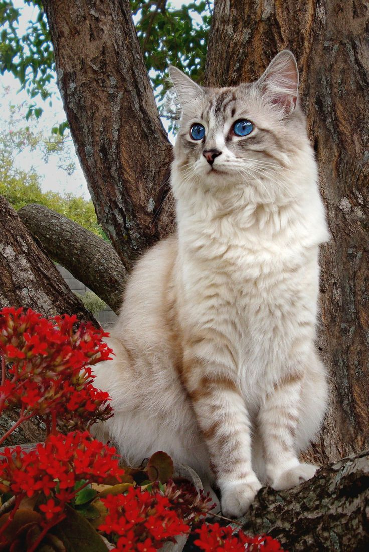 499 best Garden Cats images on Pinterest