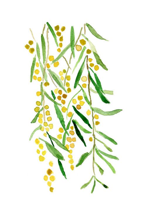 Mimosa print of original watercolor painting by TheJoyofColor