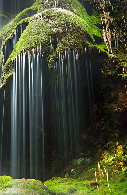 Catalonia, Spain - wonderful spot for moss under the gentle, consistent  moisture from the waterfall
