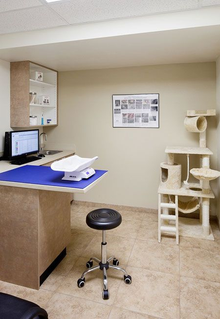 9 Best Veterinary Clinic Ideas Images On Pinterest