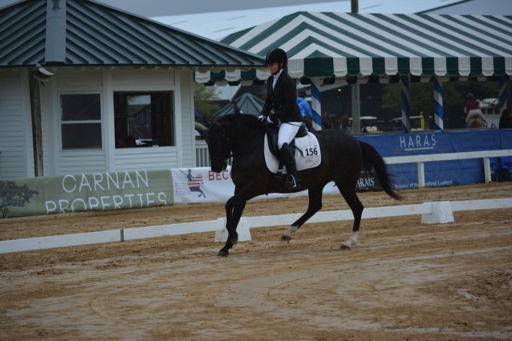 Fiona DC and Lauren Maloney Working Equitation