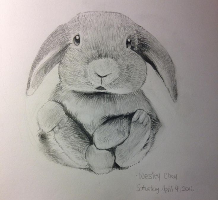 Drawing of a rabbit I did a while ago