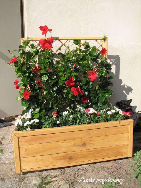 Ogród przydomowy, drewniana donica