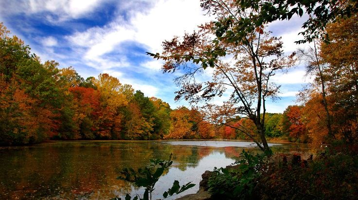 This Has a Map That Will Show You When to See Peak Fall Foliage Across the U.S. / Oct 9 '14
