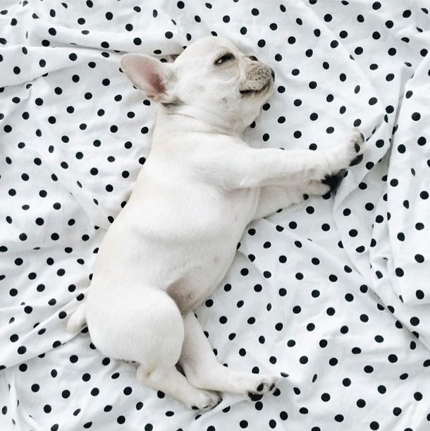 Baby Frenchies Are Best Friends & Cuddle-Buddies #refinery29  http://www.refinery29.com/dog-milk/1#slide6  Next: This Genius Dog Toy Is Absolutely Hilarious