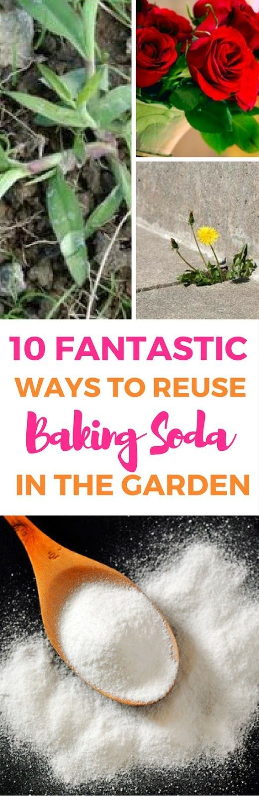 10 Super Nifty Ways To Use Baking Soda In Your Garden - Reuse baking soda in your garden and see what happens with the following things. Luckily I found these hacks!!